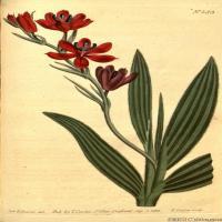 花卉插画(33)圣经花卉插画图片