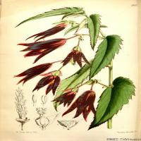 (57)欧美圣经装饰画花卉插画图案