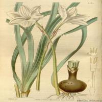 (11)欧美圣经装饰画花卉插画图案
