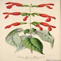 (2)欧美高清插画花卉植物装饰画图片