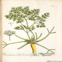 (3)欧美高清插画花卉植物装饰画图片