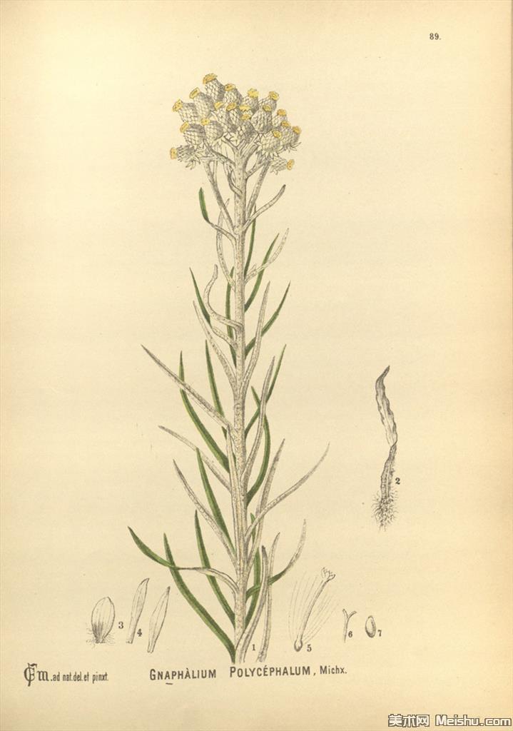 (8)欧美高清手绘插画花卉植物装饰画图片