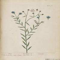 (47)欧美高清插画花卉植物装饰画图片