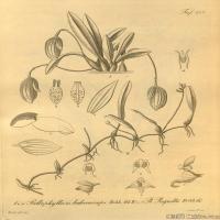 (6)插画欧美植物装饰画线稿大图片