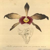(9)插画欧美植物装饰画线稿大图片