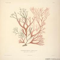 (11)插画欧美植物装饰画线稿大图片