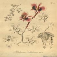 (3)插画欧美植物装饰画线稿大图片