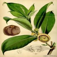 (13)植物百科手绘原稿花卉大图下载图