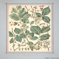 (12)植物百科手绘原稿花卉大图下载图