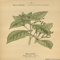 (10)植物百科手绘原稿花卉大图下载图