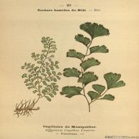 (7)植物百科手绘原稿花卉大图下载图