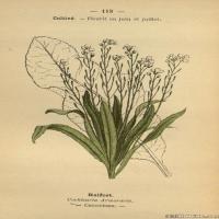 (9)植物百科手绘原稿花卉大图下载图