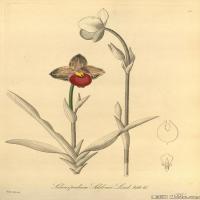 (7)插画欧美植物装饰画线稿大图片
