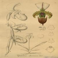 (4)插画欧美植物装饰画线稿大图片