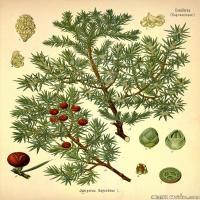 (5)植物百科手绘原稿花卉大图下载图片