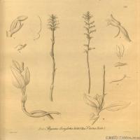 (1)插画欧美植物装饰画线稿大图片