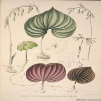 (22)欧美高清手绘插画花卉植物装饰画图片