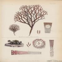 (1)植物百科手绘原稿花卉大图下载图片