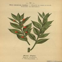 (11)植物百科手绘原稿花卉大图下载图