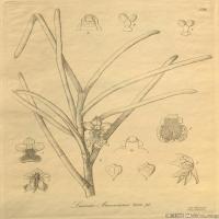 (2)插画欧美植物装饰画线稿大图片