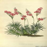 (14)植物百科手绘原稿花卉大图下载图