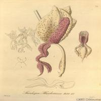 (10)插画欧美植物装饰画线稿大图片