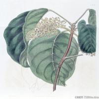 (15)植物百科手绘原稿花卉大图下载图