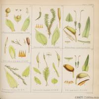 (3)植物百科手绘原稿花卉大图下载图片