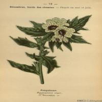 (8)植物百科手绘原稿花卉大图下载图