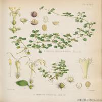 (2)植物百科手绘原稿花卉大图下载图片