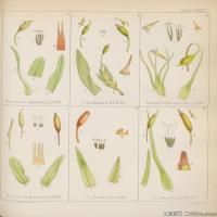 (4)植物百科手绘原稿花卉大图下载图片