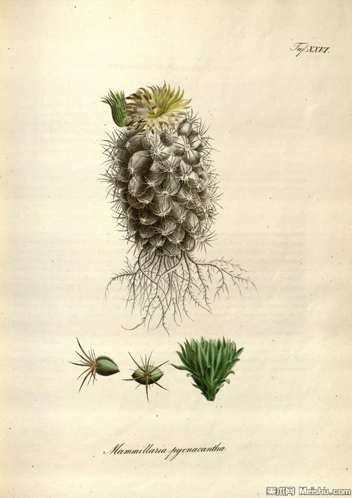 (4)欧美手绘装饰画高清植物花草插画