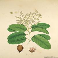 (54)欧美手绘装饰画高清植物花草插画