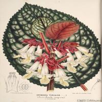(118)欧美手绘装饰画高清植物花草插画