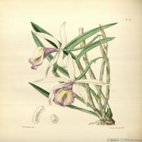 (117)欧美手绘装饰画高清植物花草插画