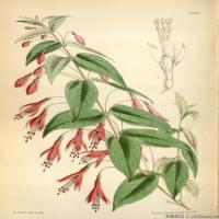 (24)高清植物花草印刷文档装饰图片