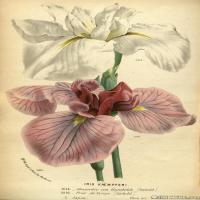 (21)高清植物花草印刷文档装饰图片