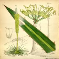 (31)高清植物花草印刷文档装饰图片