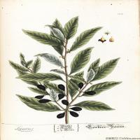 (43)高清植物花草印刷文档装饰图片