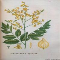 (41)高清植物花草印刷文档装饰图片