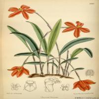 (37)高清植物花草印刷文档装饰图片