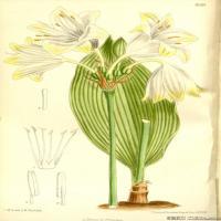 (29)高清植物花草印刷文档装饰图片