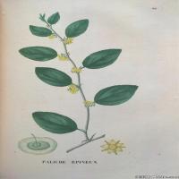 (39)高清植物花草印刷文档装饰图片