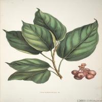 (40)高清植物花草印刷文档装饰图片