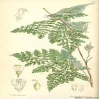 (35)高清植物花草印刷文档装饰图片