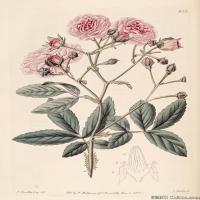 (16)高清植物花草印刷文档装饰图片