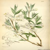 (25)高清植物花草印刷文档装饰图片