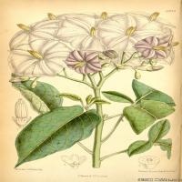(38)高清植物花草印刷文档装饰图片