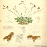 (33)高清植物花草印刷文档装饰图片