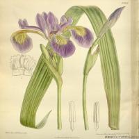 (26)高清植物花草印刷文档装饰图片